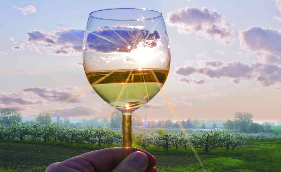 ***Wine_Glass_980x400